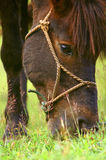 The horse. This is a horse. It eating the gress royalty free stock photos