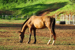 Horse eating on the ground Royalty Free Stock Photography