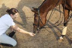 Horse eating from hand Royalty Free Stock Images