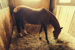 Free Horse Eating Hay Stock Images - 54934294