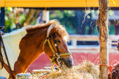 Horse eating hay Stock Photo