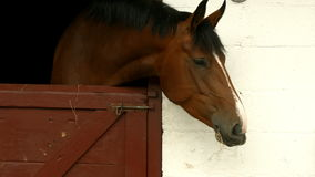 Horse eating hay in stable stock video footage