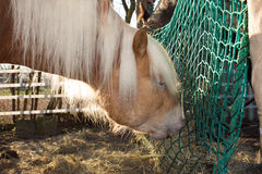 Horse is eating hey from a hey net Royalty Free Stock Image