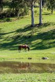 A horse eating lush green pasture beside a pond stock photos