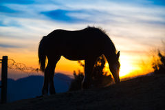 Horse eating in the meadow at sunset Royalty Free Stock Image
