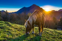 Horse eating in a mountain meadow Stock Photo