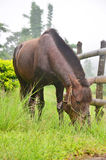 Horse eating at Pang Ung in  Mae Hong Son Stock Photo