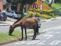 A horse eating in the road Royalty Free Stock Image