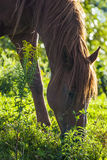 Horse eating in the wild Stock Photo