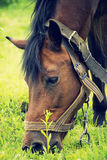 Horse eats Royalty Free Stock Photos