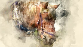 Horse eats hay. Clous up. Watercolor background Stock Photography