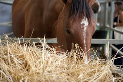 Horse eats hay from a hay rack Stock Photography