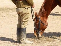 Horse eats hay. royalty free stock photography