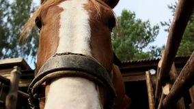 Horse eats hay in a stall stock video