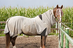 Horse with eczema blanket Royalty Free Stock Images