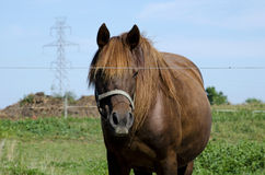 horse and electric tower Stock Images