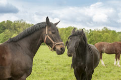 Horse emotion Stock Images