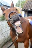 Horse enjoying shiatsu massage Royalty Free Stock Photos