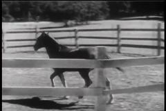 Horse entering corral and drinking water from trough stock video footage