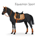 Horse with equestrian sport equipment Royalty Free Stock Photo
