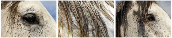 Horse head eye mane texture collage Royalty Free Stock Photography
