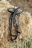 Horse equipment on a fresh bricks of hay Stock Photo