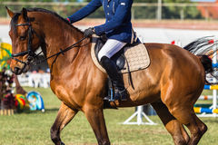 Horse Equestrian Unidentified Rider. South African Equestrian horse jumping championships held in Durban South-Africa Close-up photo horse saddle leathers boots Stock Image