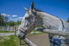 Horse, equus ferus caballus, close-up Stock Photo