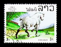 Horse (Equus ferus caballus), serie, circa 1983. MOSCOW, RUSSIA - NOVEMBER 25, 2017: A stamp printed in Lao People's Democratic Republic shows Stock Photo