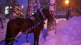 The horse is in the evening Park in the snowfall. The horse is in the evening Park. Winter time stock footage