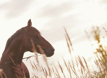 Horse at evening sky art toned Stock Photography