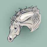 Horse. Expressive and impetuous horse posture stock illustration