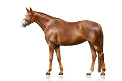 Horse exterior isolated. Red horse exterior isolated on white background stock photos