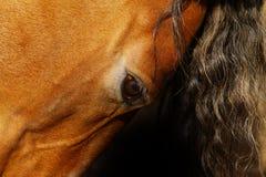 Horse eye Royalty Free Stock Image