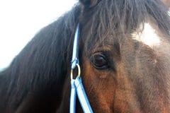 Horse eye Stock Image