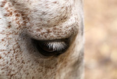 Horse eye Royalty Free Stock Photos