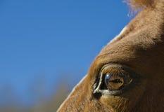 Horse eye Stock Images