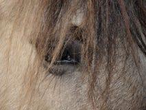 Horse eye. South Bohemia. czech republik Royalty Free Stock Photos