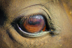 Horse. Eye of a horse Royalty Free Stock Photo