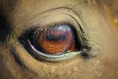 Horse. Eye of a horse royalty free stock photo