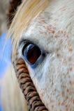 Horse eye. Closeup of beautiful horses eye Stock Photo