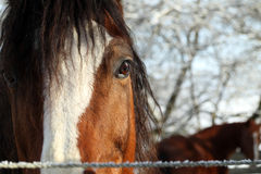 Horse eye. Detail of a horse head, brown horse blurred in backround Royalty Free Stock Photography