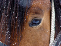 Horse eye. Closeup on a horse eye Royalty Free Stock Photo