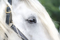 Horse eye Stock Images