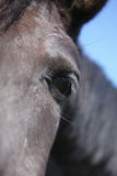 Horse eye. View of the horses head Royalty Free Stock Images