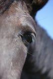 Horse eye Royalty Free Stock Images
