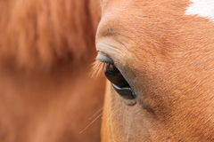 Horse eye. Animal photography: a horse eye as the mirror of his soul Stock Images