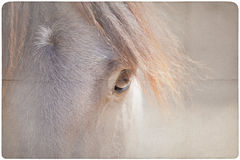 Horse eye background Royalty Free Stock Photos