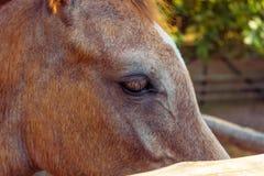 Horse eye. Royalty Free Stock Photo