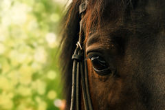 Horse eye on a blurred green background Stock Photo